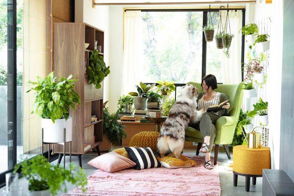 cây trồng trong nhà lọc không khí
