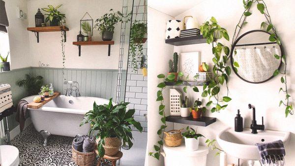 trồng cây trong nhà tắm