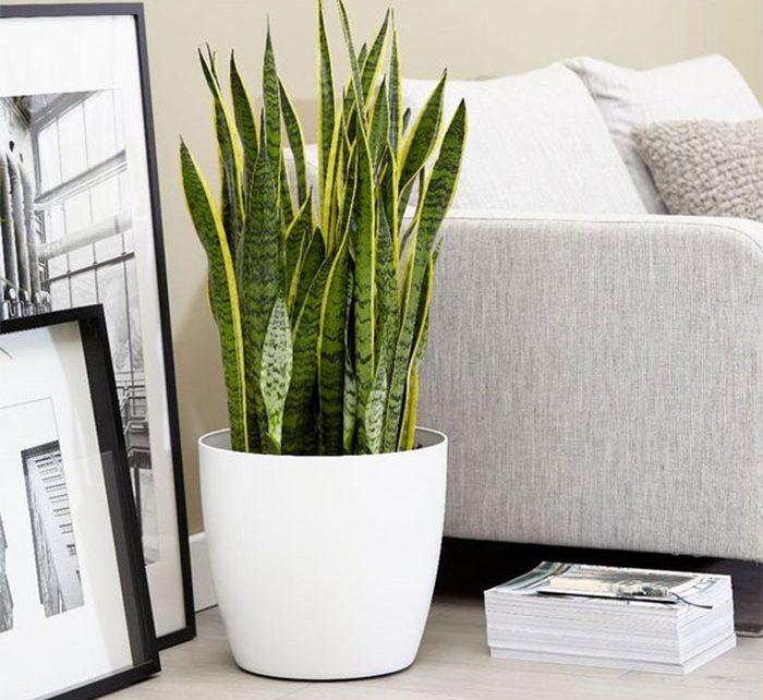 trồng cây gì trong nhà